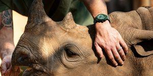 Hublot Big Bang Unico SORAI Green và sứ mệnh bảo vệ loài tê giác