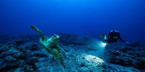 Rolex Perpetual Planet: Tôn vinh những anh hùng của đại dương